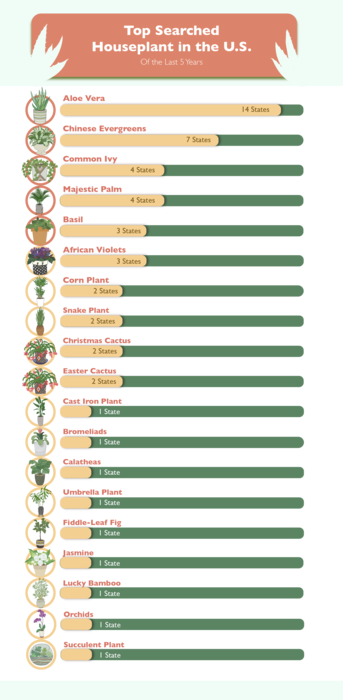 """""""The Top Searched House Plants in the Past 5 Years"""" Table"""
