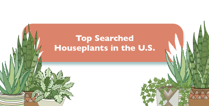 The Top Searched Houseplants in the U.S.